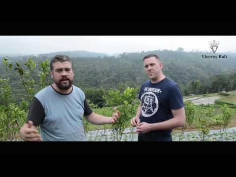 Farm to Table - CasCades Bali & Owen's organic farming