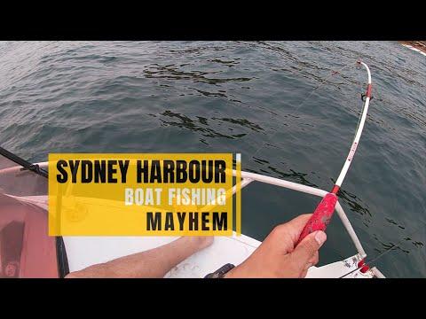 Sydney Harbour Boat Fishing Mayhem