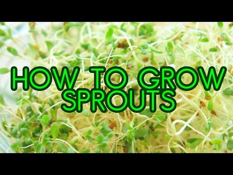 How to Grow Sprouts - Alfalfa and Broccoli Sprouting in Mason Jars
