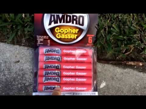 How To Get Rid Of Gophers And Moles With Amdro Gopher Er