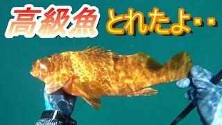 超暑いので友達と海で素潜りして、魚突きでキジハタが獲れました。 捌い...