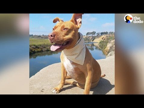 Pit Bull's Mom Fights Against Breed Discrimination