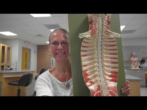 Sacral Plexus   Anatomy Tutorialиз YouTube · Длительность: 10 мин54 с