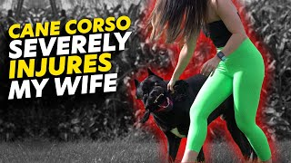 Cane Corso Severely INJURES My Wife  Dangerous!
