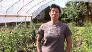 High Tunnel Initiative: NRCS helps urban farmers feed Portland