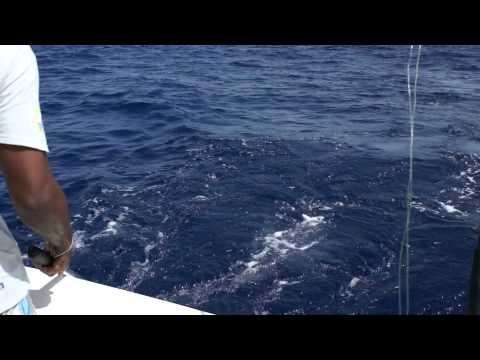Deep sea fishing in St. Maarten