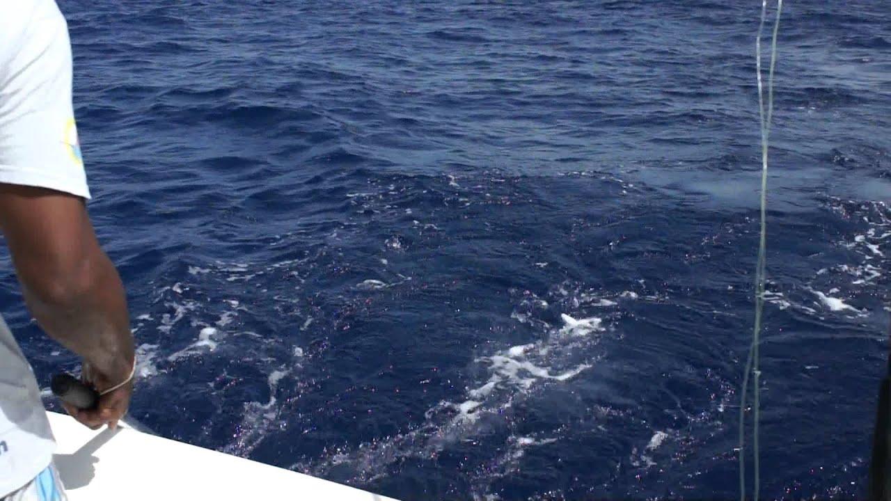 Deep sea fishing in st maarten youtube for St maarten fishing