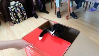 Our cat impersonates a cat piggy bank