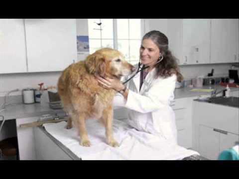 Anti Obama veterinarian celebrates Republican election victories