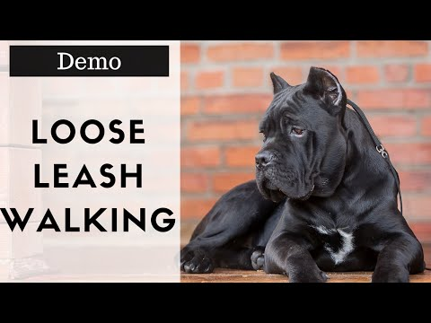 How To Walk Your Dog Without Him Pulling Demonstration