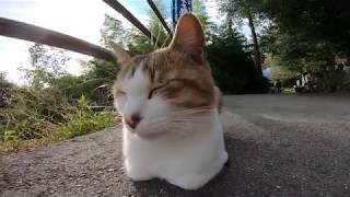 頭を撫でた時のリアクションがカワイ過ぎる野良猫 thumbnail