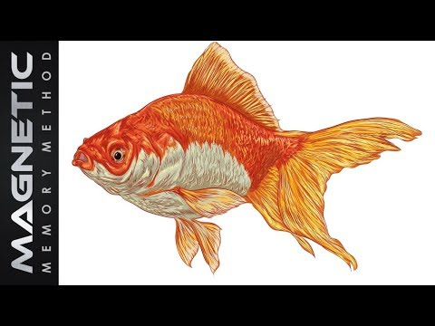 👨‍👩‍👧‍👦 Human Versus Goldfish Attention Span ♓️