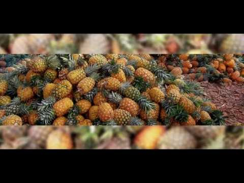 KINSHAGA FOOD PRODUCTS: PINEAPPLE PROCESSING IN MOROGORO, TANZANIA.