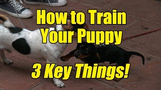 How to Train My Puppy - 3 Key Things to Remember!