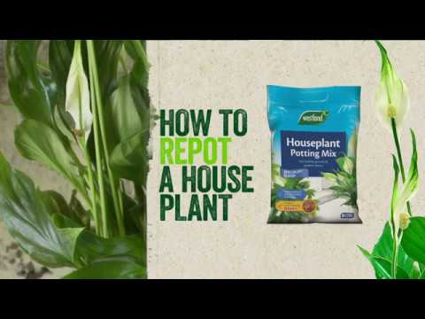 How To Repot Houseplants You
