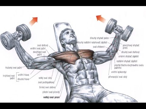 Best Bodybuilding Exercises