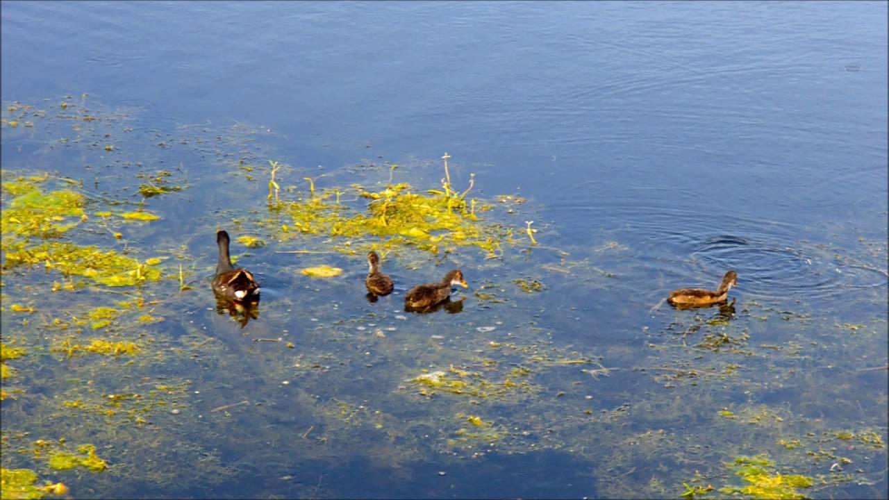 lake apopka wildlife drive youtube