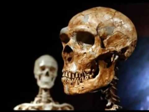 BBC reveals  that ALL  non black Africans are part Neanderthal