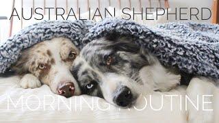 AUSTRALIAN SHEPHERD MORNING ROUTINE | 2020