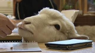 Revelers Flock to Sheep Cafe Ahead of New Year