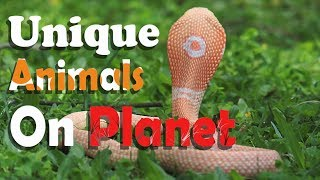 Rarest And Unique Animals Found On Planet | Albino Animals | White Animals |