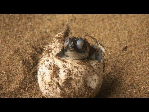 Becoming Myth: Sea Turtles in Melanesia