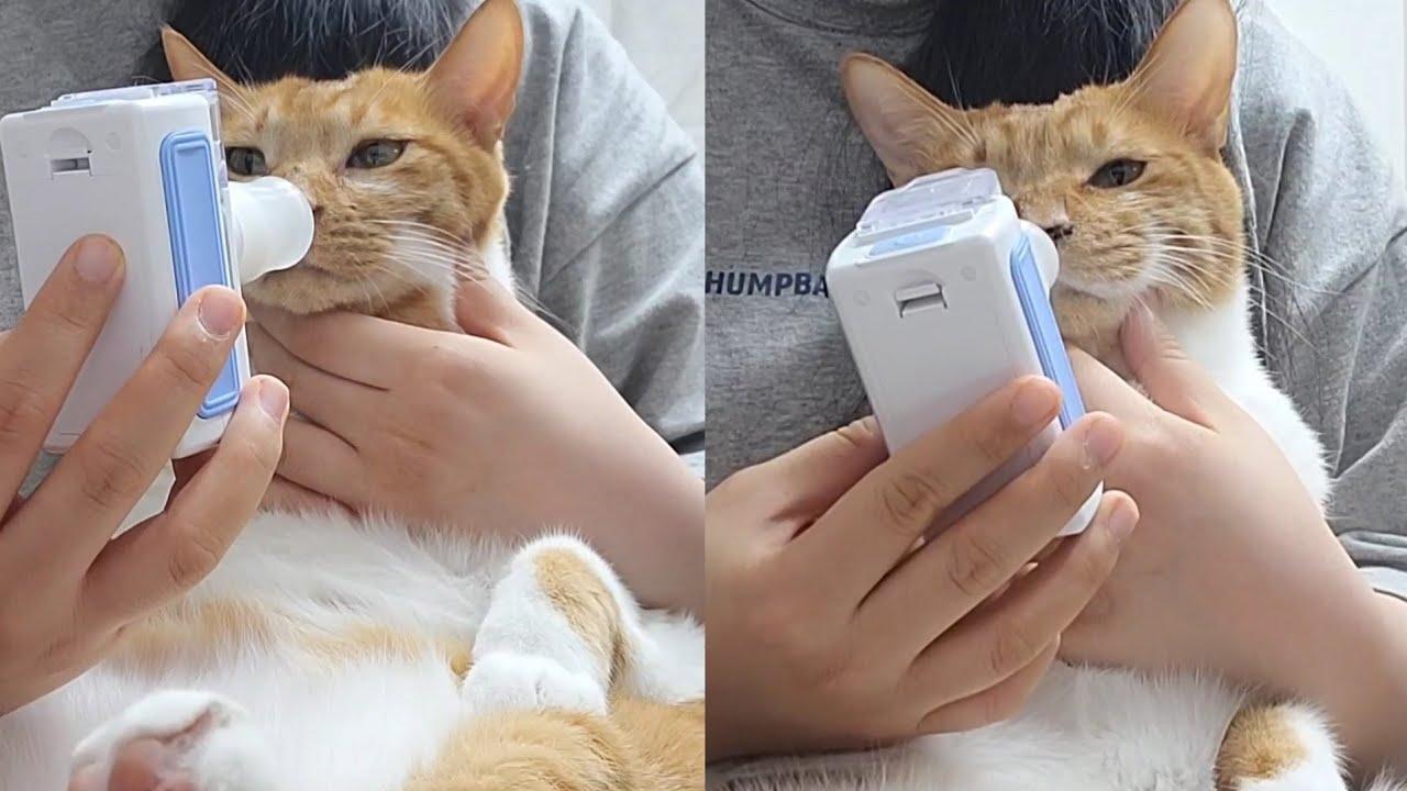 똑같이 생긴 엄마 고양이랑 아들 고양이 네뷸하기😁