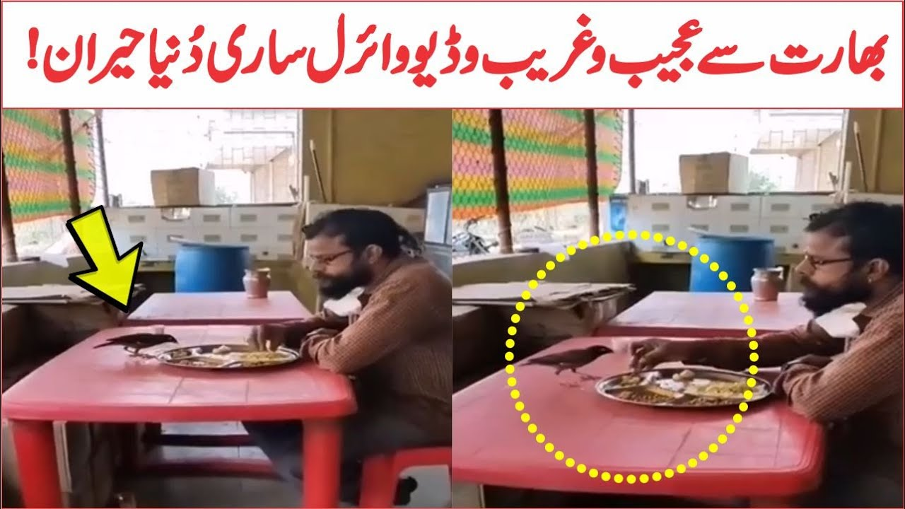 Man And Sparrow Eats Food With Same Plate Viral Video | AR Videos
