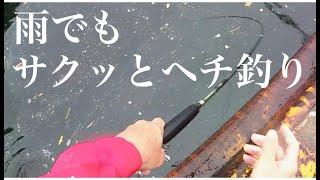 雨でもサクッとヘチ釣り【チヌ釣り 黒鯛釣り 落とし込み】