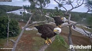 SWFL Eagles ~ Intruder Chased Away By Mom & Dad! Slo Mo 1.12.18