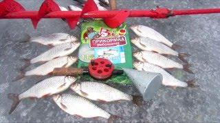 Рыбалка на Ладоге. Зеленцы, 9 февраля 2016