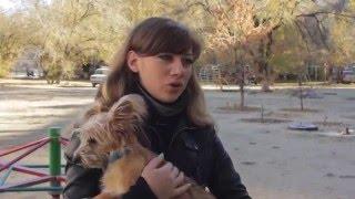 В Волгограде менеджер сделал фильм про бездомных животных