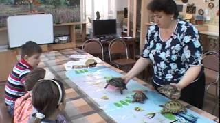 23 мая -Всемирный день черепахи.