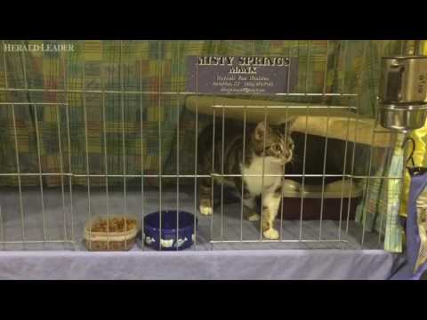 The Purrfect Cat Show