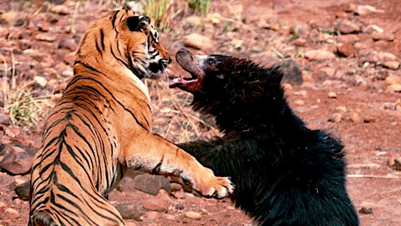 ПЕС ОТОМСТИЛ ГАДЮКЕ! 15 Сумасшедших битв животных снятых на камеру #7
