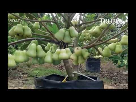 World's Strangest Fruits - That Look Like Aliens