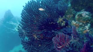 Scuba diving in ustica, sicily with ...