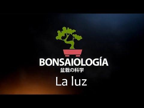 fisiología-vegetal-bonsai---la-luz
