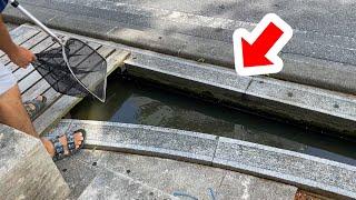 外来魚しかいなくなった沖縄の用水路に網を入れた結果・・・!