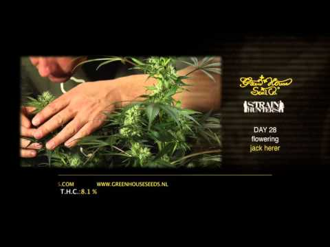 Jack Herer - Green House Grow Sessions
