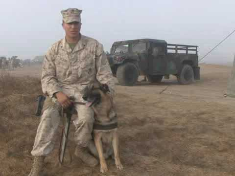 Military Working Dogs Part 1