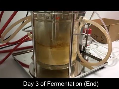 Submerged-Solid-Substrate Fermentation of Sugarcane Bagasse