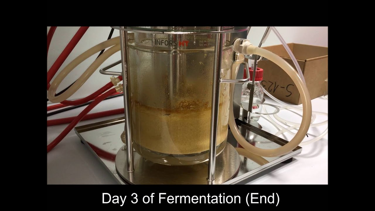 submerged and solid state fermentation Download free full-text of an article comparison of solid substrate and submerged fermentation for chitosan production by.