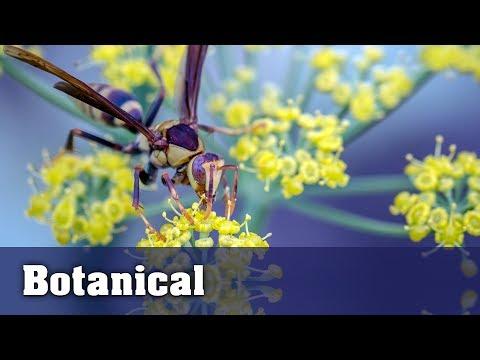 Botanical Garden - Macro Photography Adventure with Canon 80D