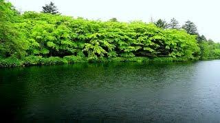 雨と新緑の雲場池・4K撮影