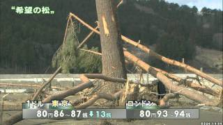A Pine Tree of hope in Rikuzentakata (Mar. 24, 2011)