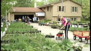 Money Saver Plant Sale -  Perennials are a garden money saver