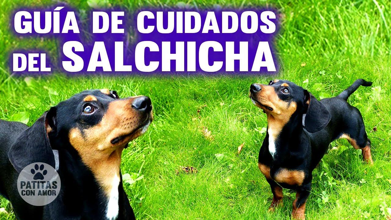 Pin En Perro Salchicha