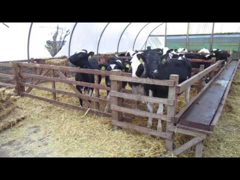 Compact feeding for intensive Scottish set up
