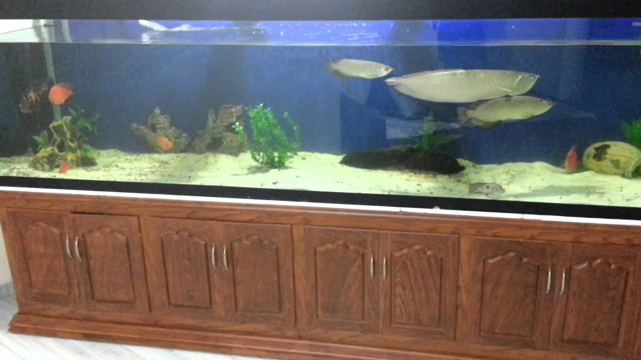 Fish aquarium for sale in karachi - 10 Foot Aquarium